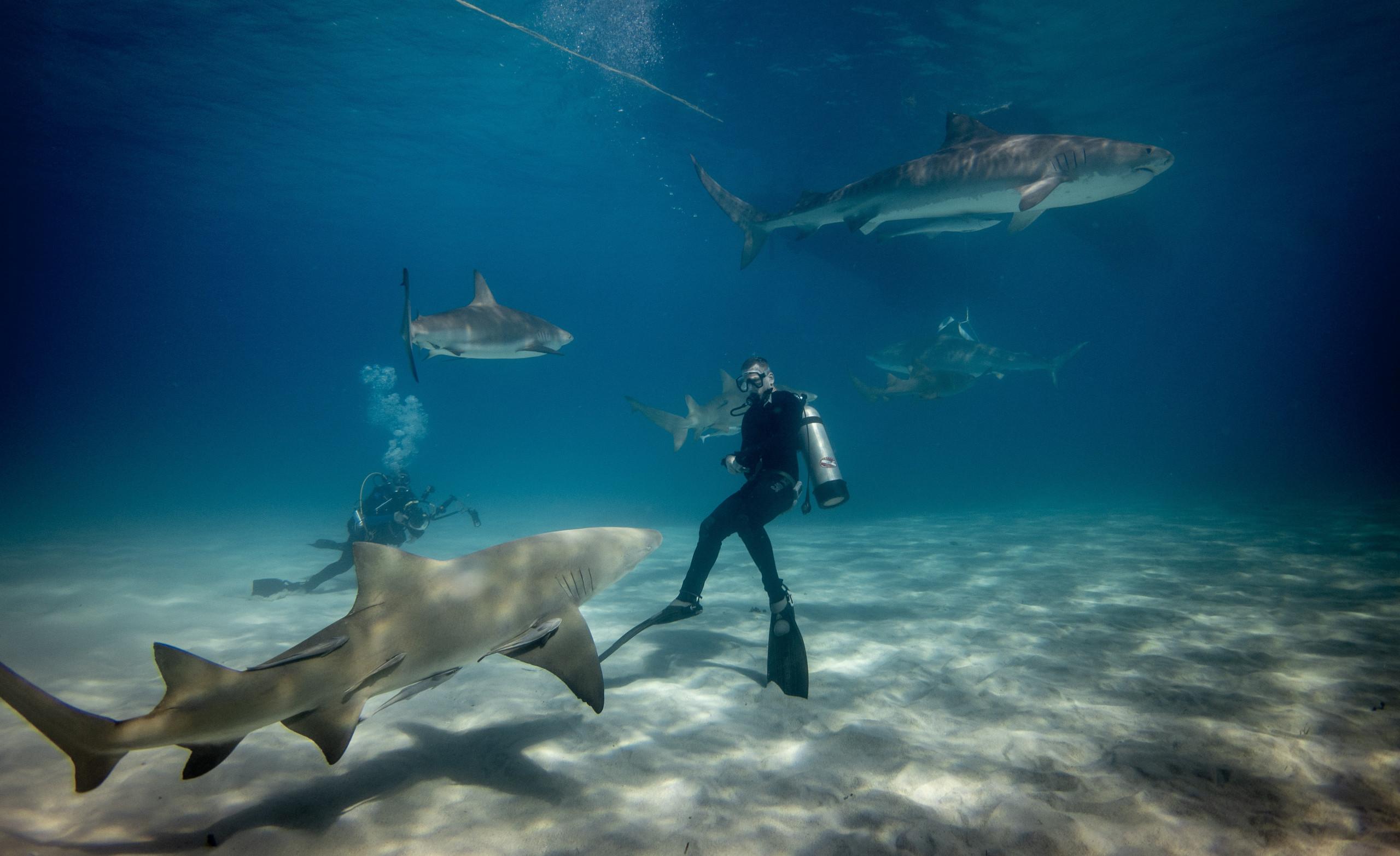 Immersione con gli squali